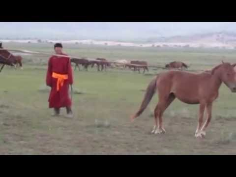 Catching a horse