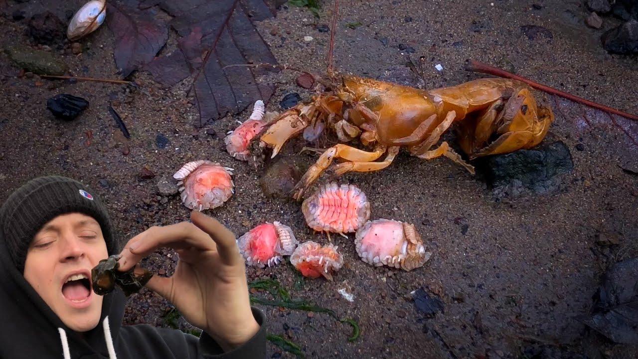 Satisfying Shrimp Parasite Removals | Should I Eat One?