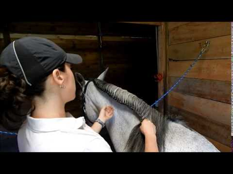 How To Running Braid & French Braid your horse for schooling - FULL TUTORIAL