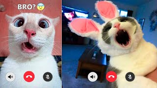 Funniest Cats And Dogs Videos 😻🐶 - Best Funny Animal Videos Of The 2021  🤣