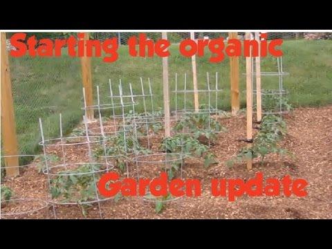 Update on building my vegetable garden