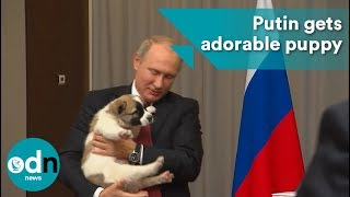 Putin gets adorable puppy for his 65th birthday