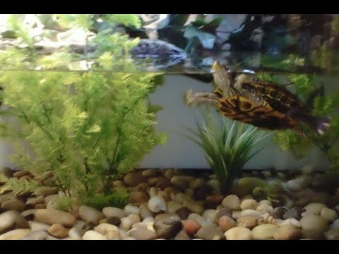 Decorating Ideas for Turtle Tank. How to on a budget!