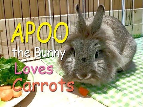 Apoo the Bunny Loves Carrots!