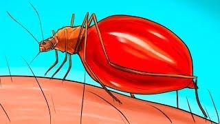 Cosa Succede al Tuo Corpo Quando Ti Punge una Zanzara