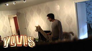 I kveld med Ylvis - David gir bort en stor puddel (Åke)