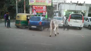 Crazy bull fight and a doggy trying to solve by debojyoti