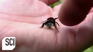 High Fiving a Bee | Outrageous Acts of Science
