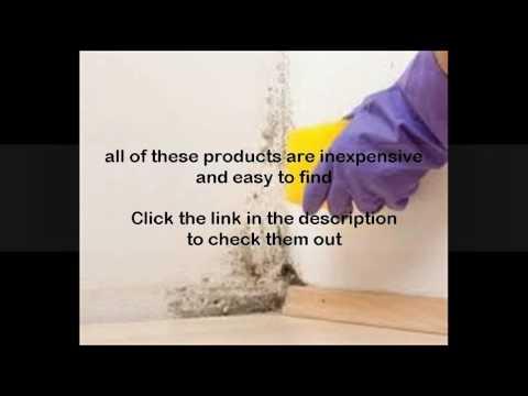 bleach solution to kill mold