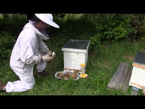 Using Lemongrass Oil When Beekeeping