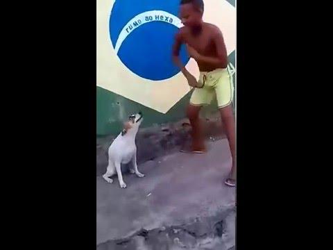 Dog Has A Fever It S Got The Disco Fever