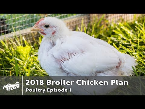 $17,280 Raising Pastured Poultry in Chicken Tractors