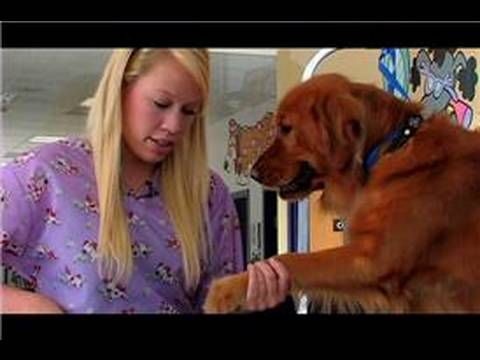Dog Grooming : How to Groom Your Golden Retriever