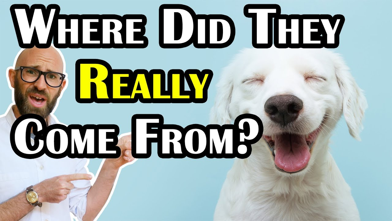 Where Did Dogs Really Come From?