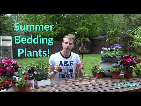 Summer Bedding Plants | Jack Shilley