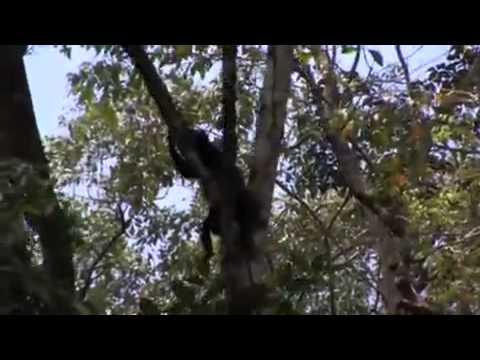 Rainforest Adventure Tour in Costa Rica