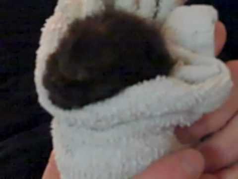 Burping the  Kitten