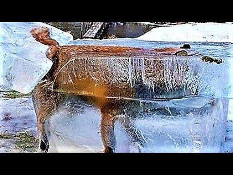 Animals Found FROZEN In Ice !