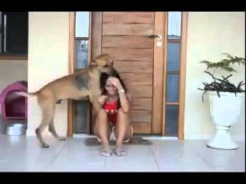 Xxx Mp4 Touching Video Of A Rescued Dog Shows His Gratitude 3gp Sex