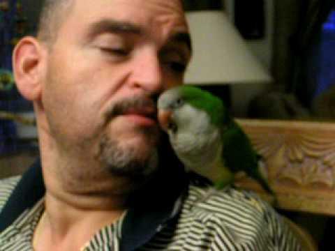 Amazing Spanish talking Quaker Parrot