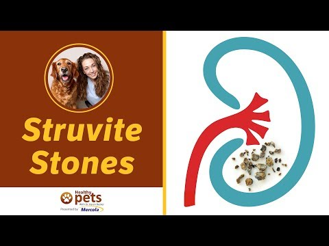 Dr. Becker Explains Struvite Stones