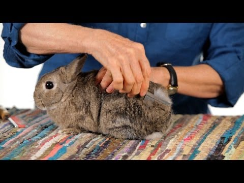 Do Rabbits Shed? | Pet Rabbits