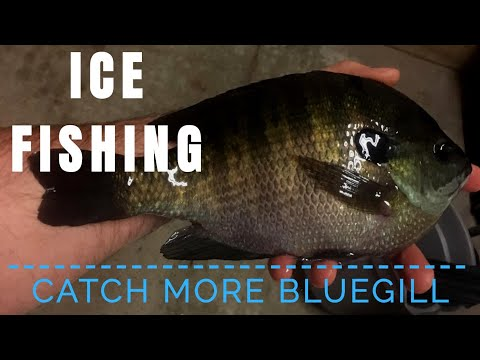 How to Catch More Bluegill Ice Fishing