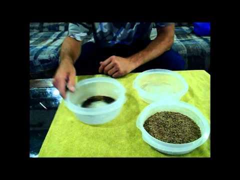 Wild Edibles: Plantain Peanut Butter