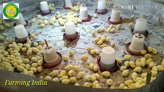 Poultry day 1 | How to start poultry farm | murgi palan kais