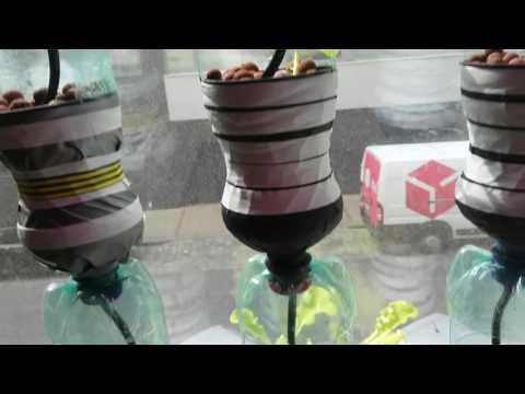 Hydroponic window farm drip system.