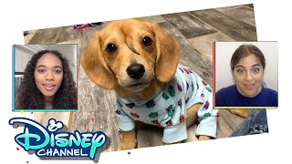 Narwhal Pup | In The Nook | Disney Channel