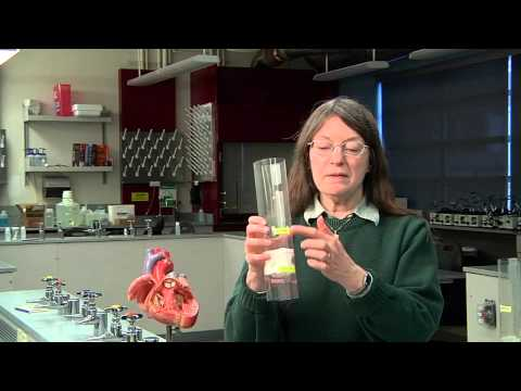 Making Working Models of Heart Valves   part 1 of 2