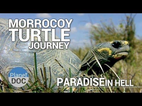 Morrocoy Turtle Journey. Paradise in Hell | Full Documentary - Plantet Doc Full Documentaries
