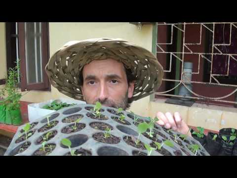 Viewers Ideas: Can you Acclimatize Vegetable Plants to a different Country and How it's done!