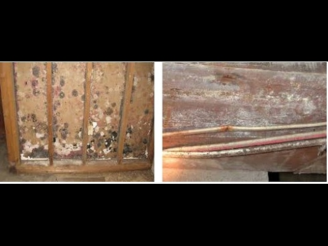 how to kill black mold on wood review
