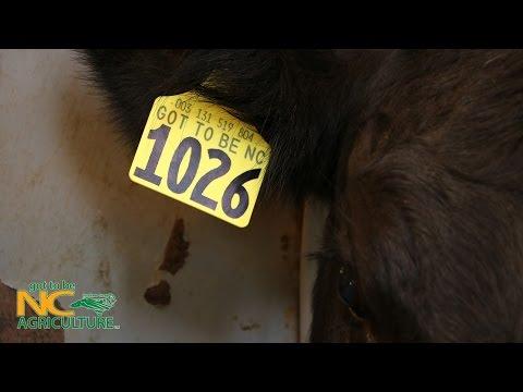Got to Be NC Livestock Tag Program