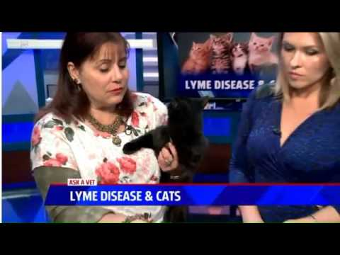 Preventing Lyme Disease in Cats - Ask a Vet with Dr. Jyl