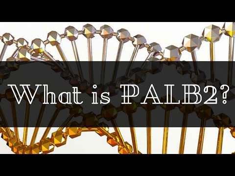 What is PALB2?