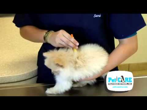 How to Remove a Tick on your Pet