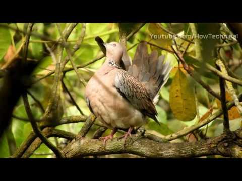 Nikon Coolpix B700 4K Video Birds in Jungle