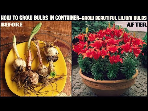 How to Grow Flower Bulbs in Container (Fast N Easy Way)