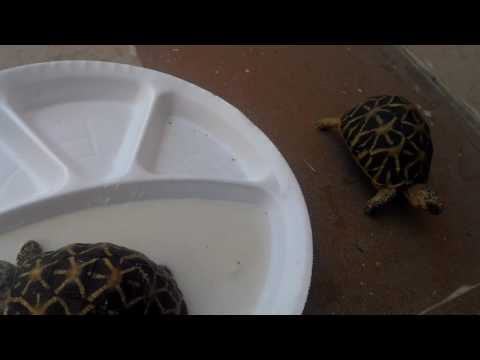 Tips for pet tortoises - especially for the ones who are not eating for days