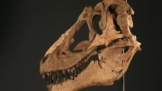 Dinosaurs Left Evidence Of Their Mating Ritual In Colorado | Secrets of the Underground