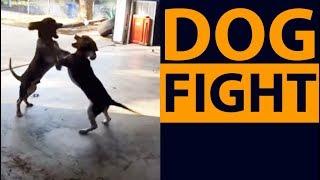 Yo dog fight