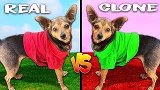 We Cloned our Dogs and Didn't Expect This! (Real Dog Vs. Clone)