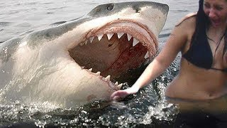Top 10 DEADLIEST Shark Attacks