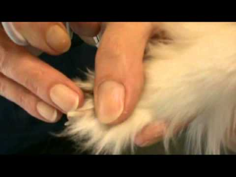 How To Clip A Dog's Claws / Toe Nails