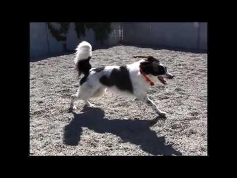 Dog License Video