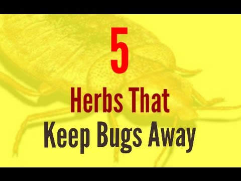 5 Herbs That Keep Bugs Away | How To Keep Bugs Away Naturally