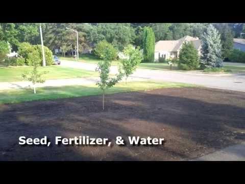 DIY Lawn Renovation -Top soil, grass seed, fertilizer, water